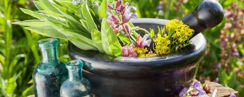 La phytothérapie, l'alternative verte