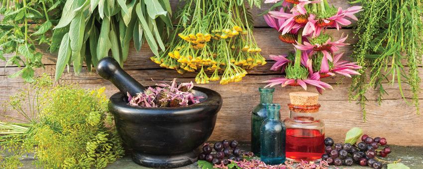 Les thérapies naturelles : bénéficier des vertus médicinales des plantes
