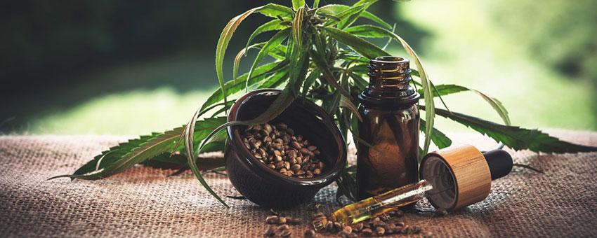 Le cannabis thérapeutique